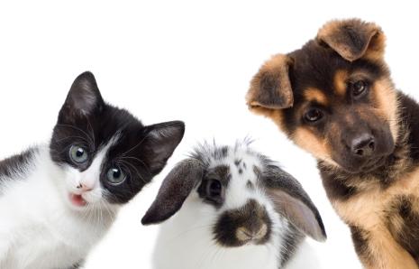 cat, dog, rabbit