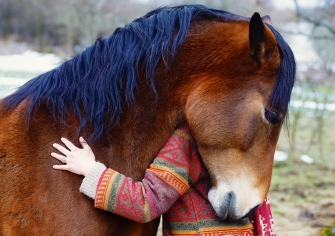 hugging horse with gal in colorful sweater