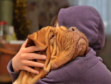 dog de bordeaux with girl in purple sweater