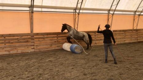 Tedd jumping